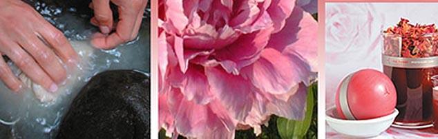 redflowerhomepage1.jpg
