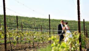 vineyard_wedding_black_star_farms