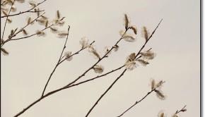 minimal spring