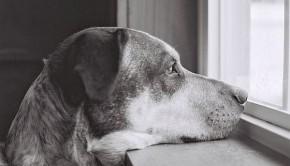 Dogbygryhrt