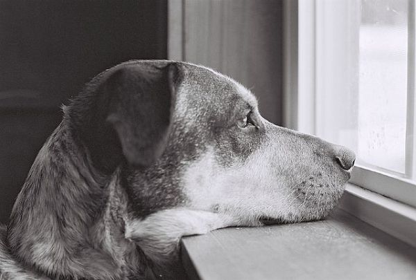 Dog by gryhrt