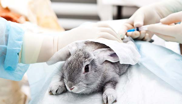 Animal Testing Phase-Out in China (sort of)