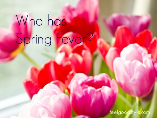 Tulips Spring Fever