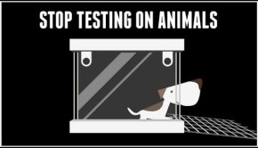 PCRM Animal Testing Video Spotlights Industry Evils