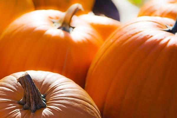 3 Fabulous Fall Foods
