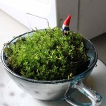7 Simple Terrarium Ideas