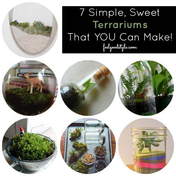 7 Terrarium Ideas That YOU Can Make