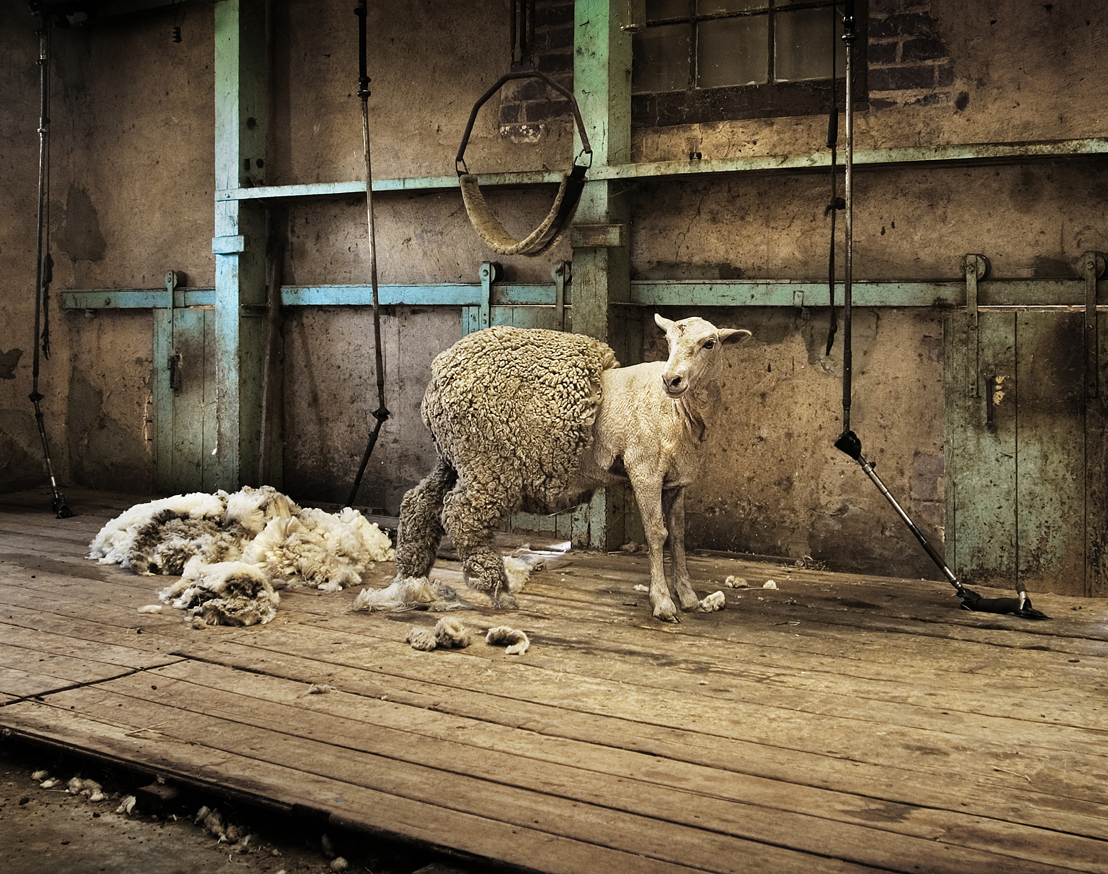 Is Wool Clothing as Bad as Fur?