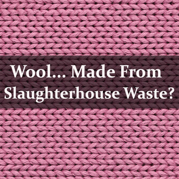 Would You Wear Wool Made from Slaughterhouse Scraps?